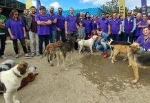 Getir'den Sokak Hayvanları İçin Yeni Proje: 'Yardım Maması'